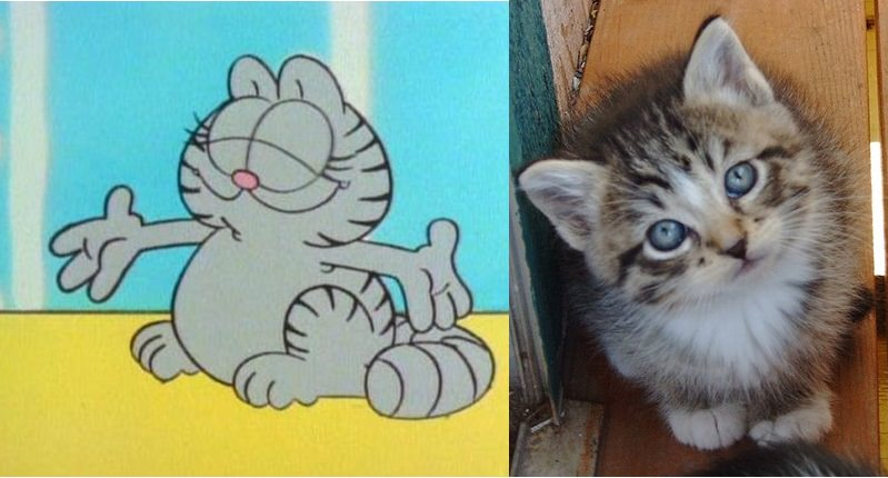 10 Iconic Cartoon Cats And Their Real Life Counterparts