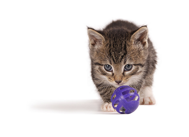 Ask A Vet: Why Is Play Important For My Cat?