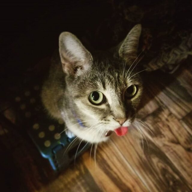 Cattycorner Why Does My Cat Lick Plastic And Other Surfaces Indonews Post